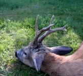 polowania dewizowe-6
