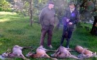 polowania dewizowe-7