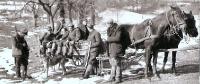 1945/46 - pierwsze polowania zbiorowe