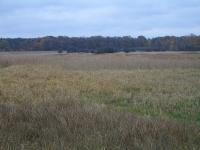 2005 - 05 listopad - obw.35